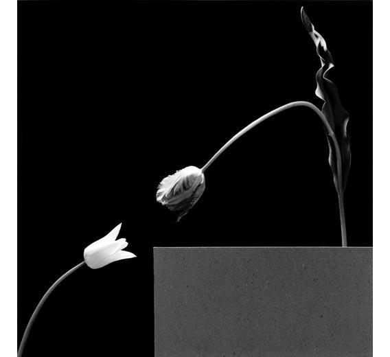 VdfE177 two tulips 1984p