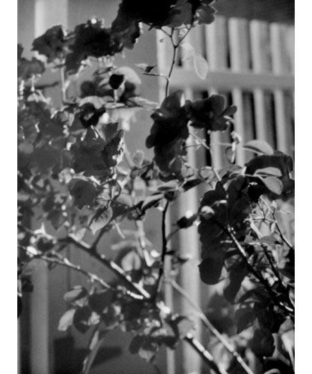 01 Cesarco Fragile Images 2011