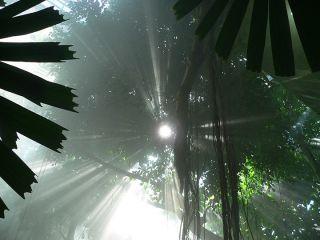 1  rainforest 2