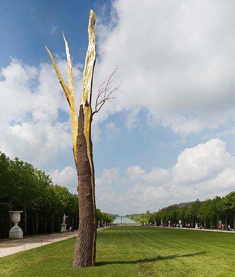 albero folgorato credit Tadzio