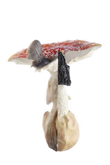 01 Triple Giant Mushrooms 2009 2010