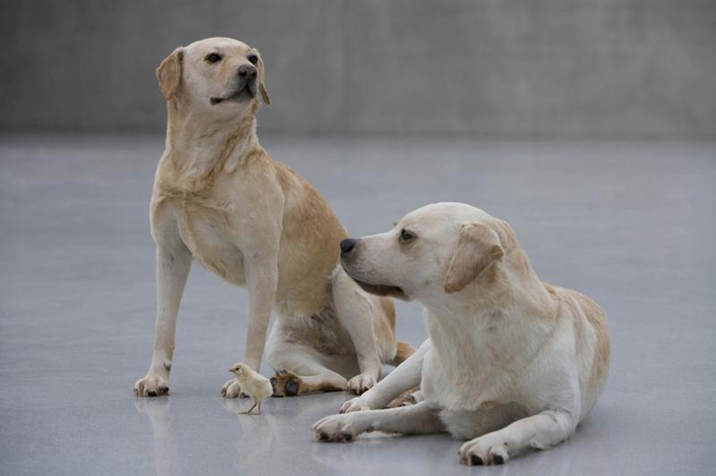 2 MaurizioCattelan dogs