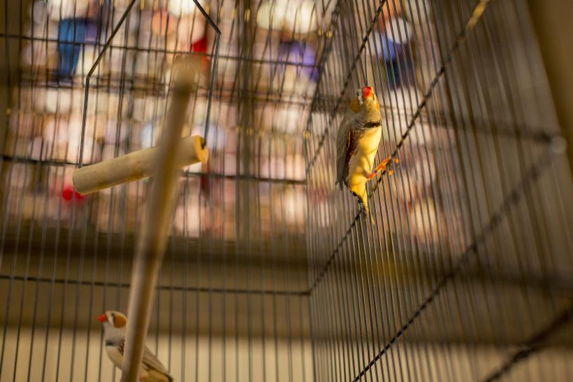 Annika Kahrs: A Concert for the Birds