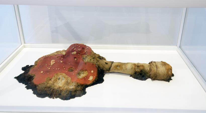 Dead Amanita No. 6, Polymer, oil, lacquer, wood, glass, 10 x 18 x 12 inches