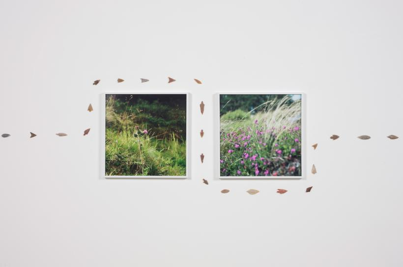 Photographs taken while taking an uninvited stroll on the Glenmazeran Grouse Moor, August 2014, Installation view, The Modern Institute, Glasgow