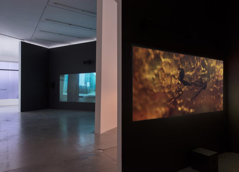 Installation view, 'Pierre Huyghe. IN. BORDER. DEEP', Hauser & Wirth London, 2014
