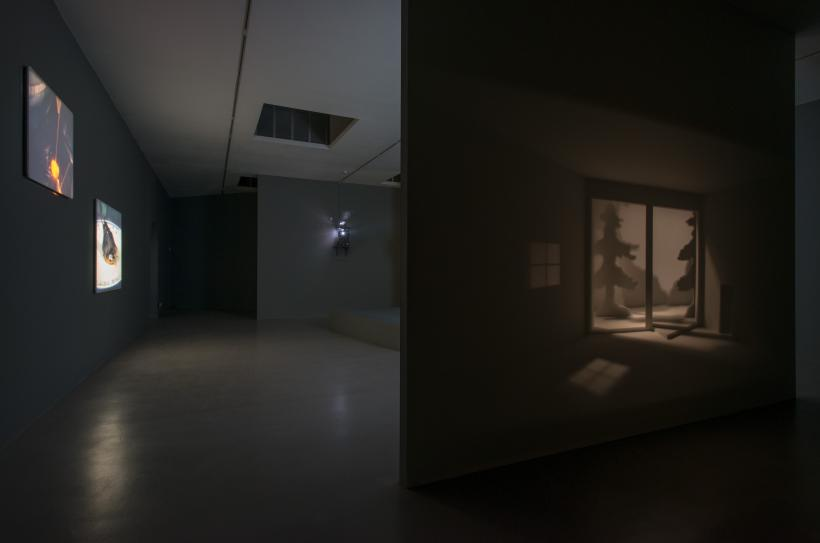 Installation view, Papagaio