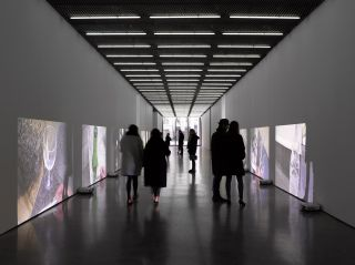 Installation view, solo exhibition, White Cube Bermondsey