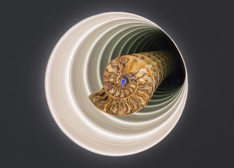 Ammonite Dub