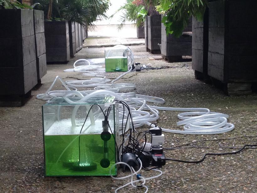 Daniel Keller, Onanet Spiruline 2, living spirulina algae, aqueous nutrient solution, nano cube glass aquariums, power plugs, heaters, air compressors, LED air stones, pumps, tubing, dimensions variable
