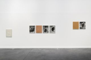 Hereditary Language, Installation View