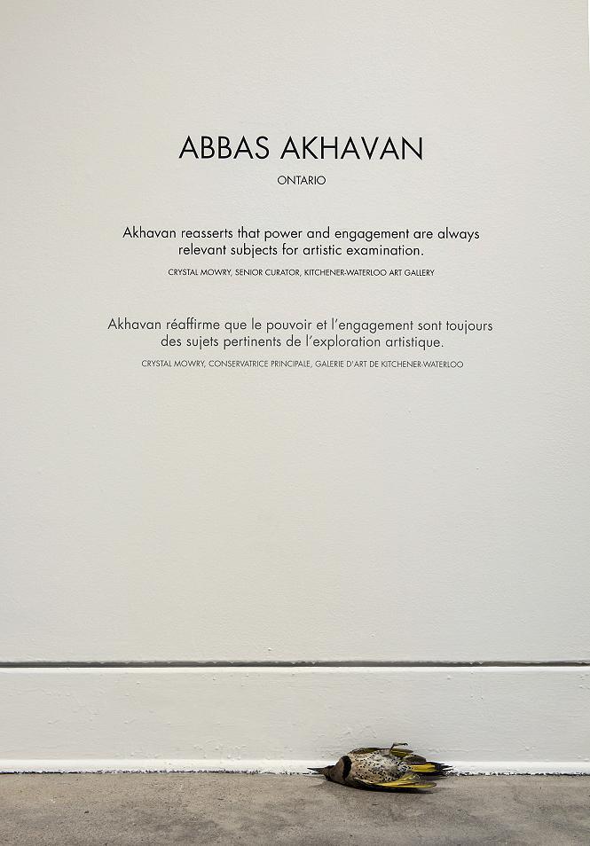 Abbas Akhavan, Fatigues, 2014, Taxidermy animals, dimensions variable