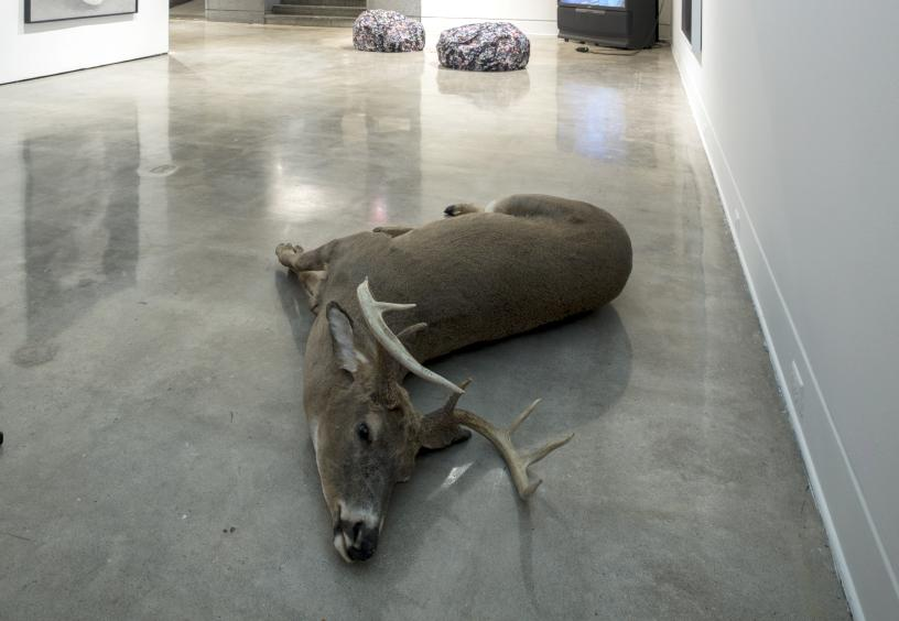 Abbas Akhavan, Fatigues, 2014, Taxidermy animals, dimensions variable