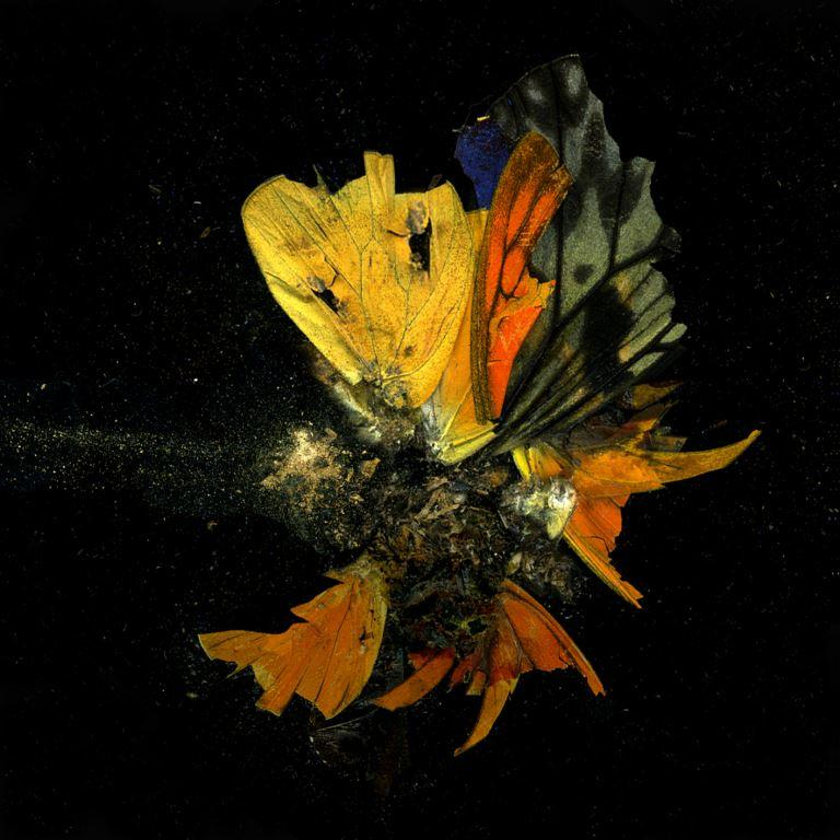 Mat Collishaw, Insecticide 13, 2009