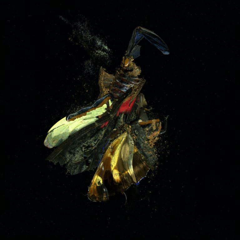 Mat Collishaw, Insecticide 18, 2009