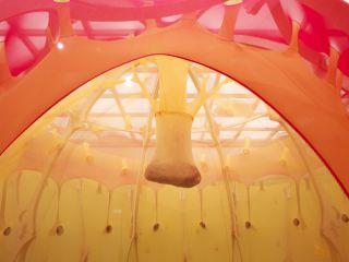 Ernesto Neto   Installation at  Hayward Gallery1 (4)  Image Credit Steve White