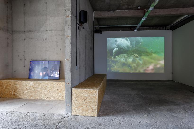 Installation view, Michel Auder at S1 Artspace