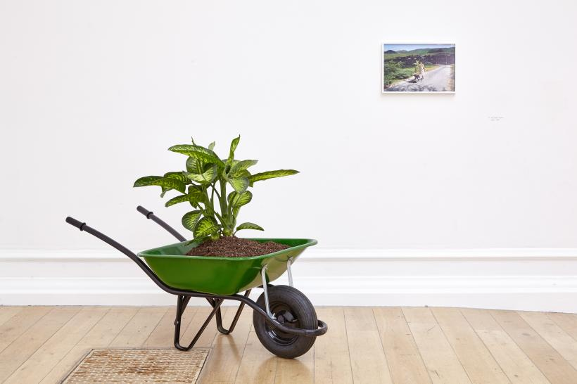 Wilfredo Prieto, Walk, 2000. Wheelbarrow, soil, plant, and inkjet print, overall dimensions variable. Installation view: Under the Same Sun: Art from Latin America Today, South London Gallery, June 10-September 4, 2016.