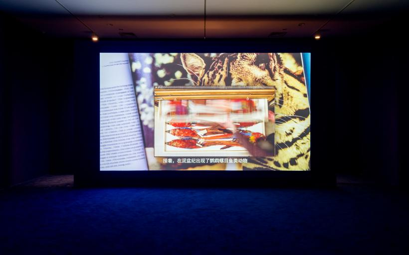 Camille Henrot, Grosse Fatigue, 2013, installation view at Yuz Museum Shanghai