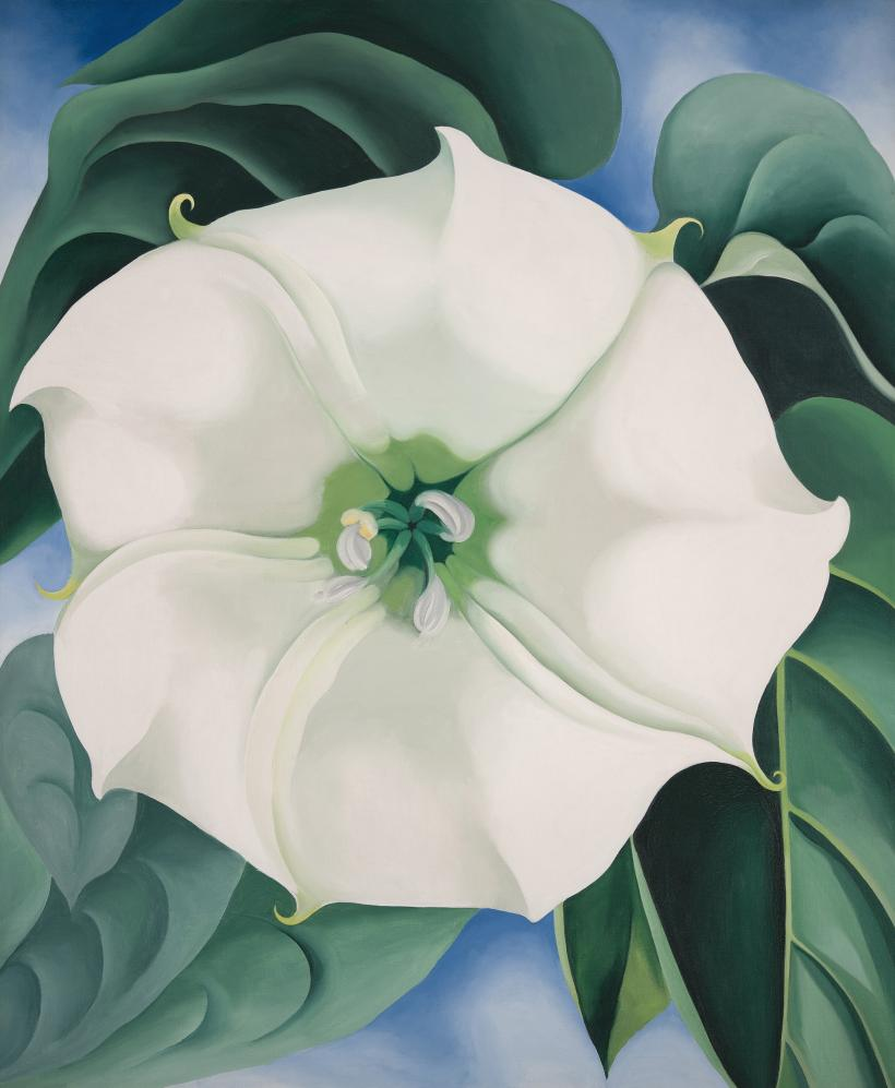 Jimson Weed/White Flower No. 1