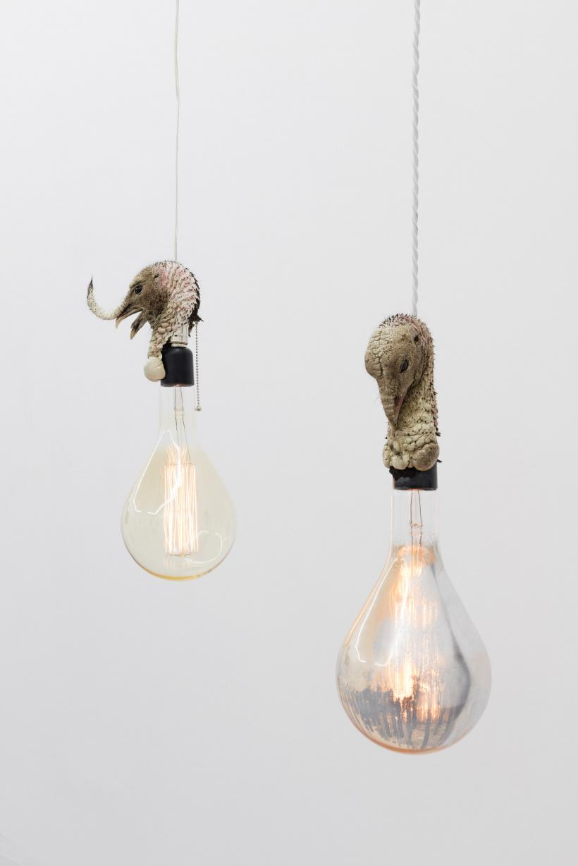 Jeffrey Joyal, TBD, 2016, and TOM 4, 2015; taxidermy turkey head, lightbulb, mirrored paint, electrical components, dimensions variable