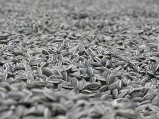 ai weiwei sunflower seeds 1