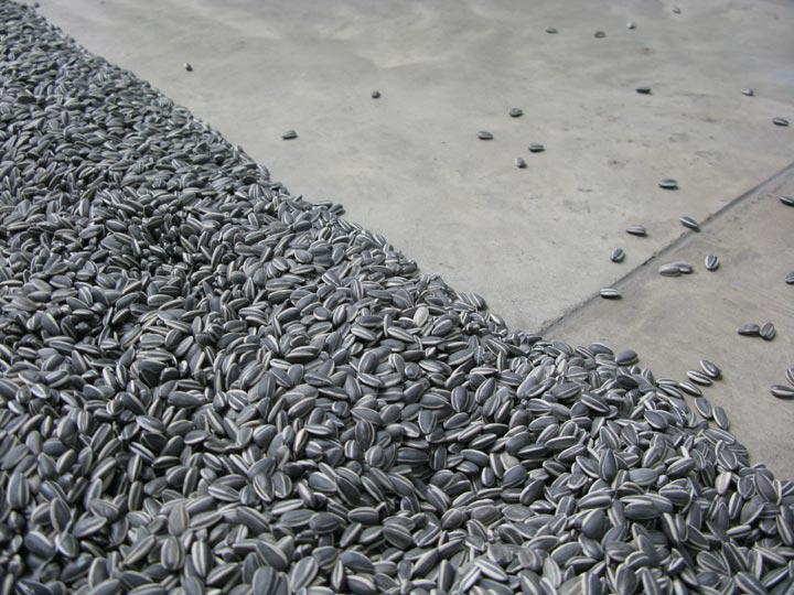 ai weiwei sunflower seeds 7