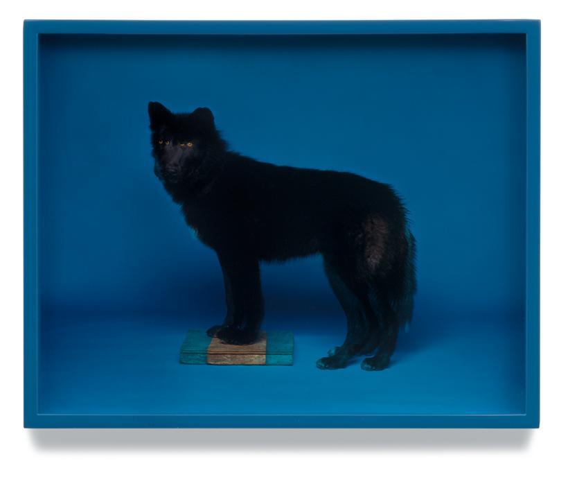 Wolf (Blue)