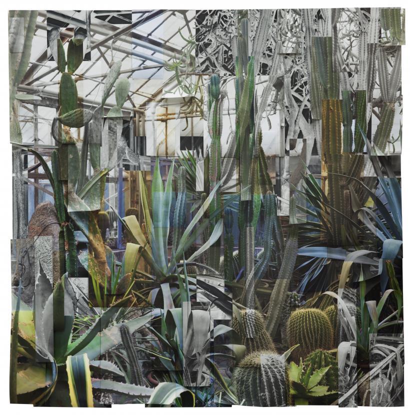 Ji Zhou, Greenhouse 3, 2017, archival pigment print, 120 x 120 cm