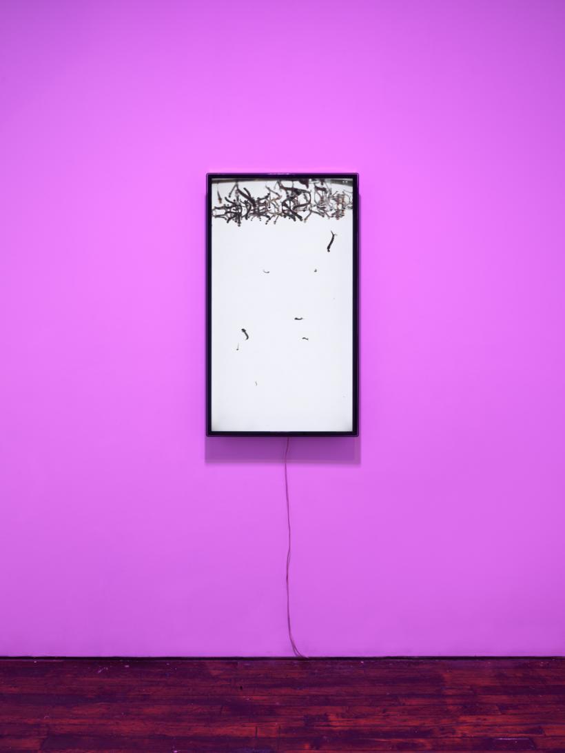Rhonda Holberton: Still Life installation view
