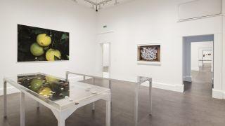 Wolfgang Tillmans, Rebuilding the Future, 26 October 2018 – 17 February 2019, Installation view IMMA, Dublin, 2018