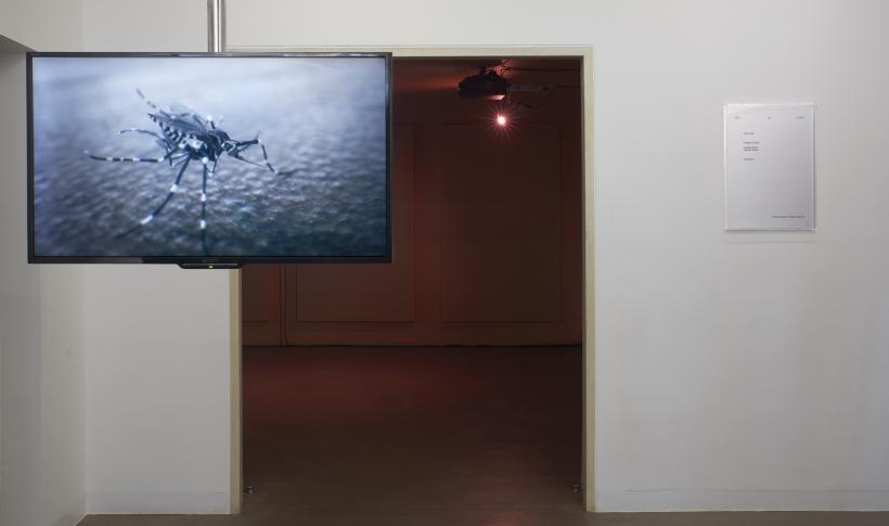 Pedro Neves Marques, It Bites Back, 2019 (featuring music by HAUT). Exhibition view at Gasworks, London.