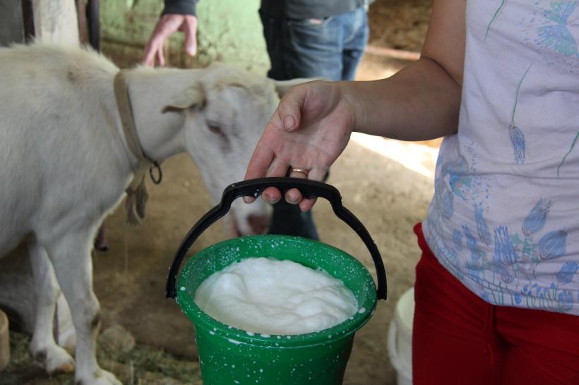 Goatmilk, Zvizzchi, 2012