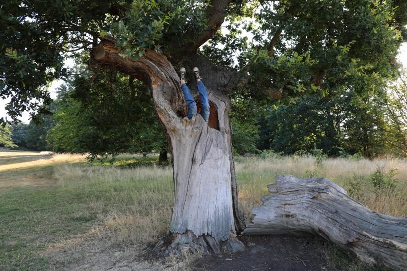 Rebecca Moss, Tree