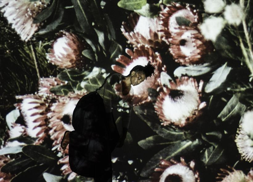 Botanical Dreams