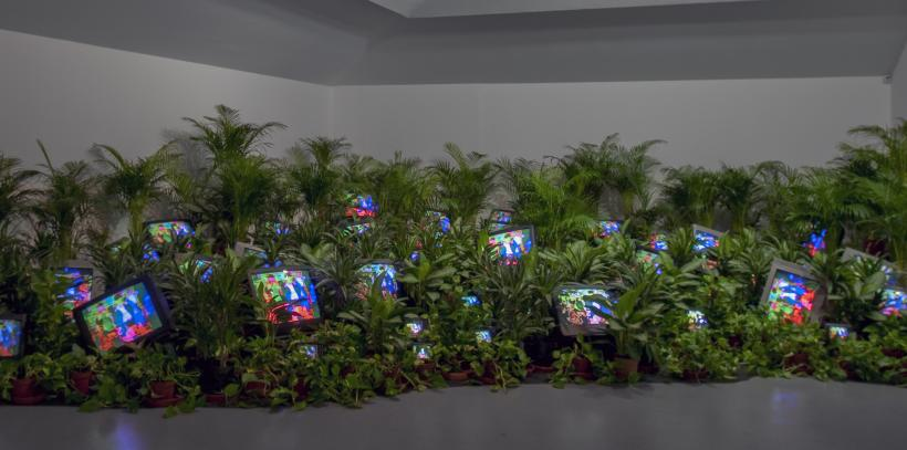 TV Garden. 1974-1977 (2002) Single-channel video installation with live plants and colour television monitors