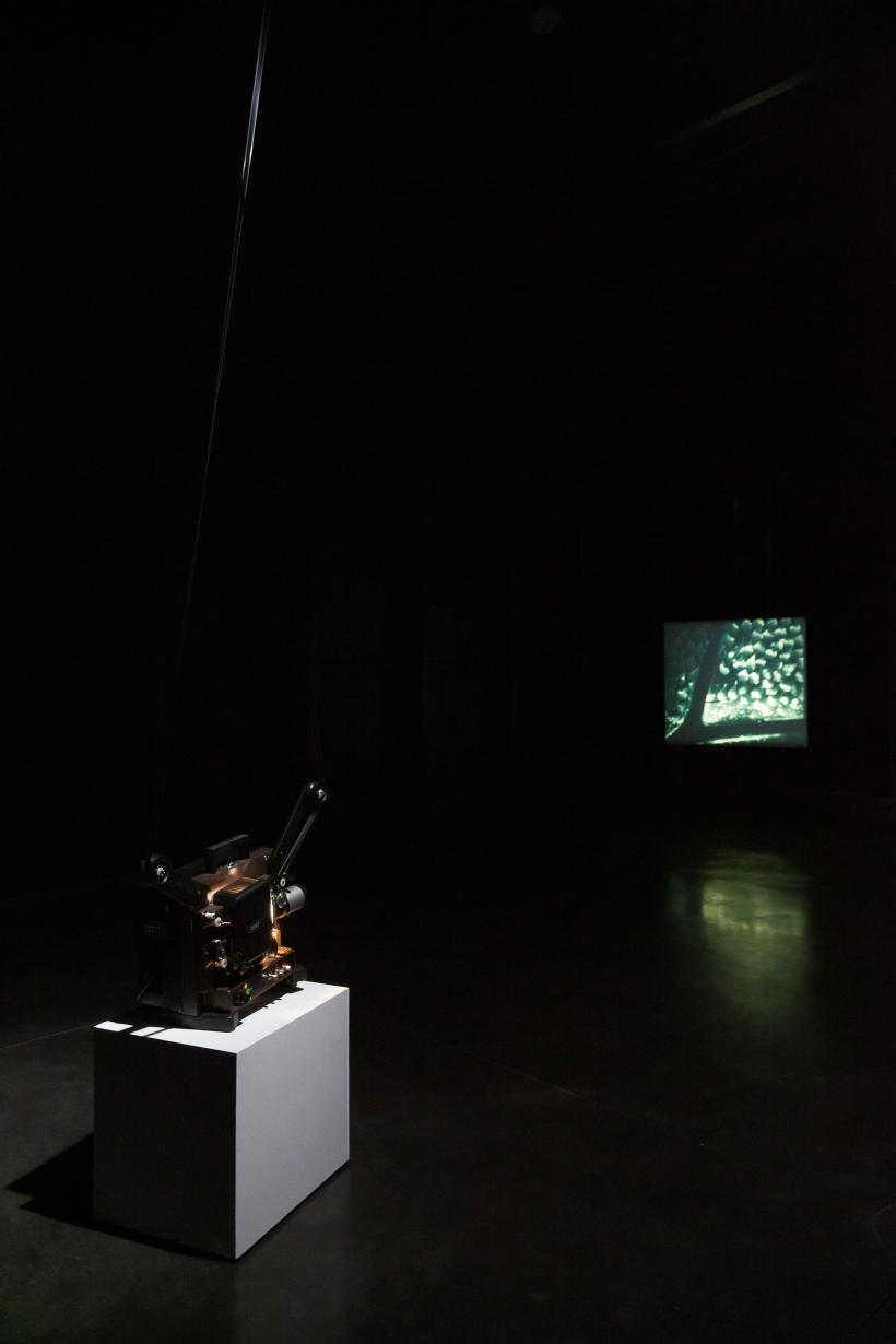 Installation view of Transparent Things (2020), at Goldsmiths Centre for Contemporary Art, London
