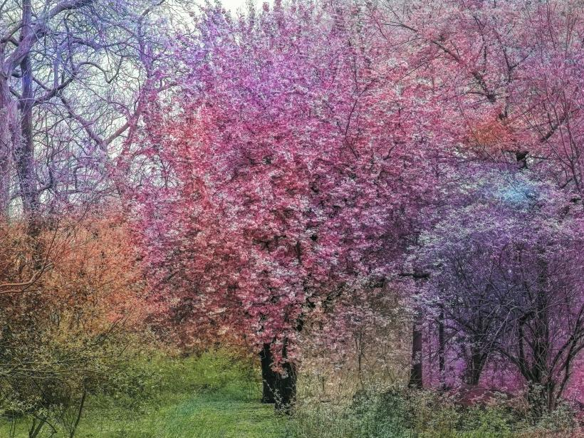 Bloom (#836c74)