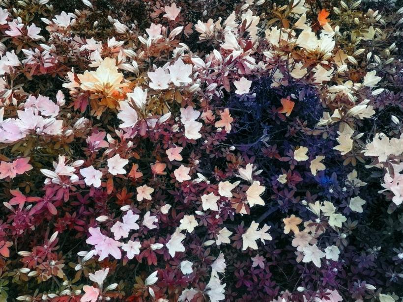 Bloom (#5f5554)