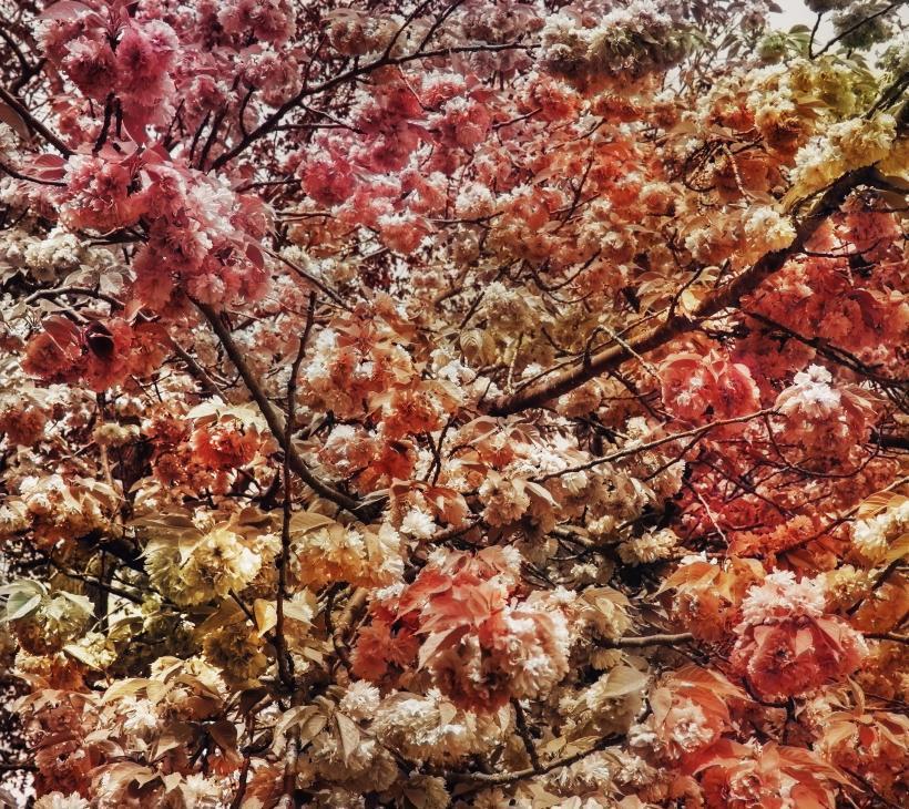 Bloom (#7a5a4e)