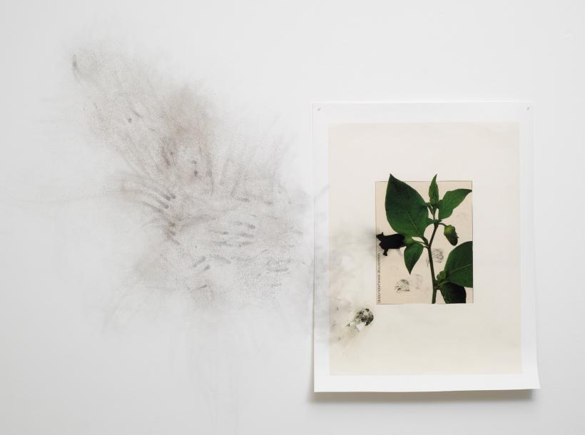 Untitled (belladonna) (1)