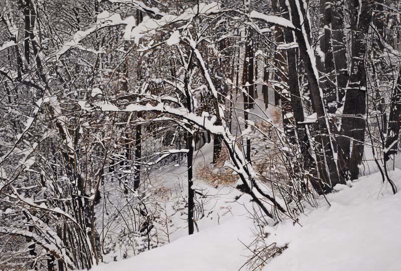 Gertsch Winter