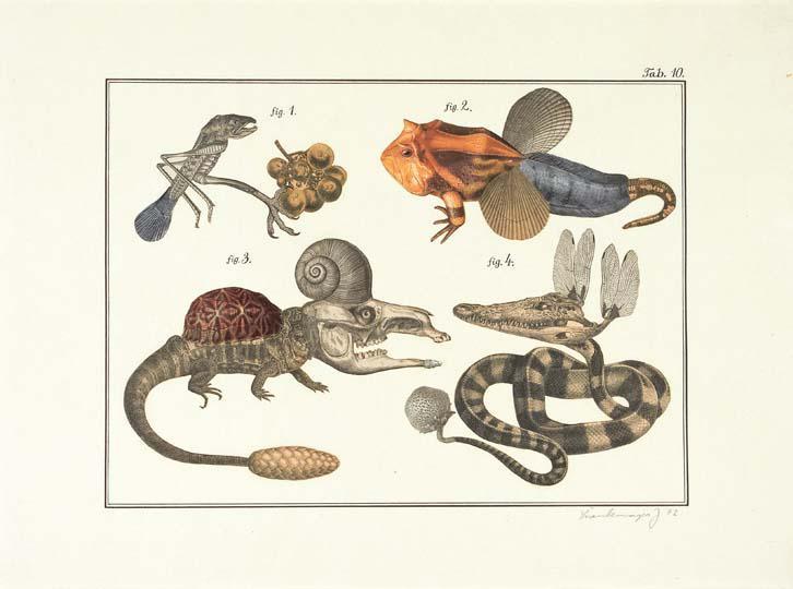 4 Natural History 10