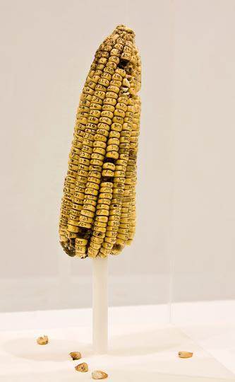 3.ICA Classified Cob